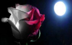 Solstizio d'Estate a Ferrara. Celebrazioni nell'Oasi Valentini il 19 giugno