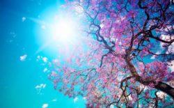 Il 20 marzo l'Equinozio di Primavera