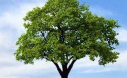 Ambiente. La perfetta tecnologia degli alberi potrebbe aiutarci a vivere meglio